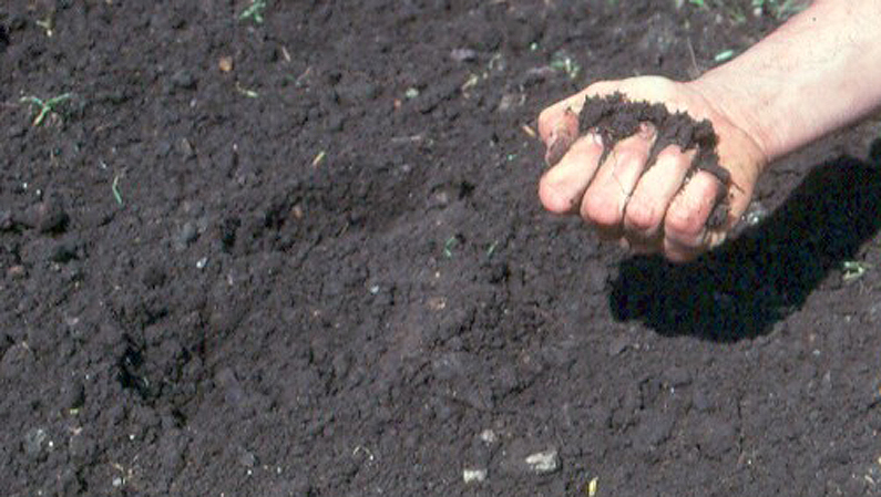 organic Soil Quality Photo