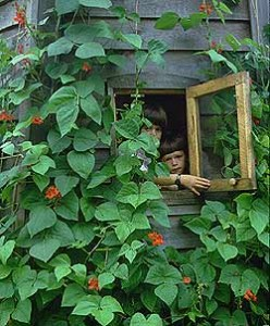 Runner Beans on Child's Playhouse